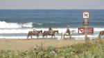 jazda konna, plaża, morze